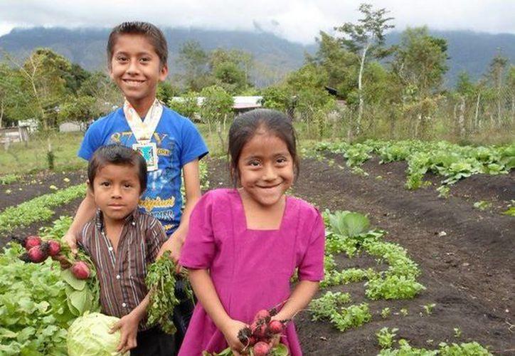 La asociación Ixim fue reconocida por su labor con la comunidad Tzental de Ocosingo, Chiapas. (Facebook oficial)