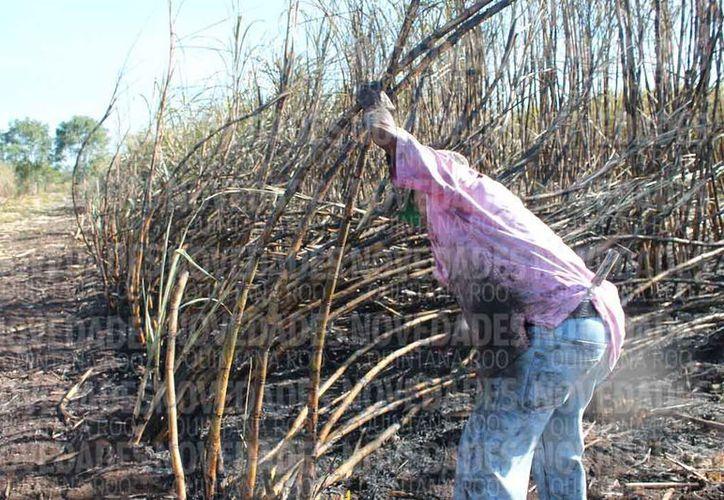 Los cortadores de caña son provenientes principalmente de Guatemala y Belice. (Ángel Castilla/SIPSE)