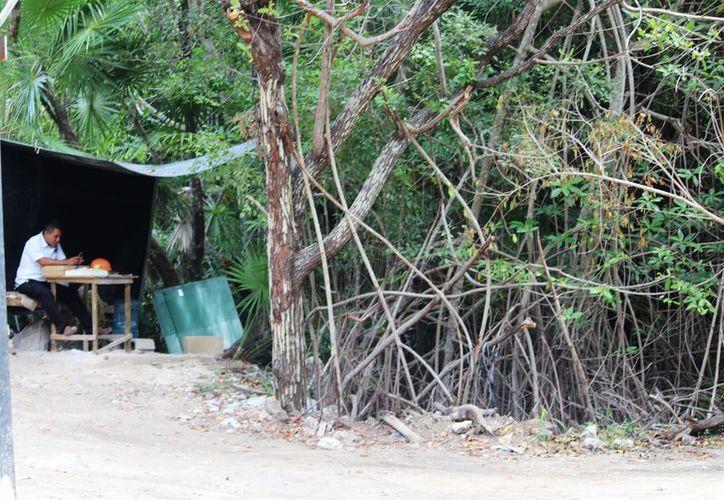 Nuevamente se registró la remoción de mangle en Playa del Carmen, en el camino que lleva a Punta Beté.  (Octavio Martínez/SIPSE)