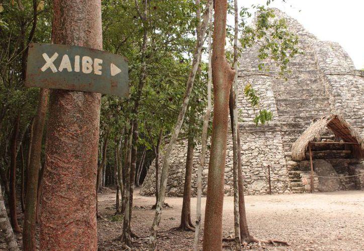 En Cobá además de conocer más sobre la cultura maya, podrás caminar entre la vegetación tropical.  (María José Castillo/SIPSE)