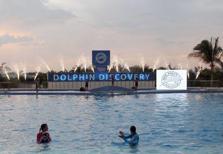Los delfinarios ofrecen calidad en el servicio. (Israel Leal/SIPSE)