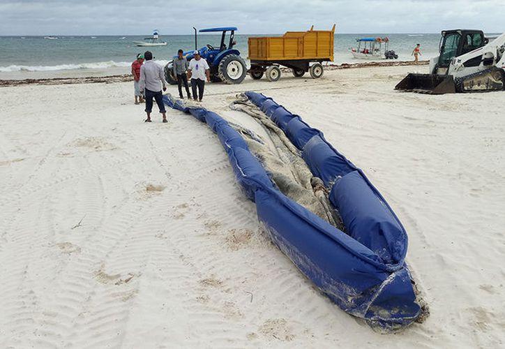 El sargazo podría seguir retirándose desde la playa y no mar adentro. (Sara Cauich)