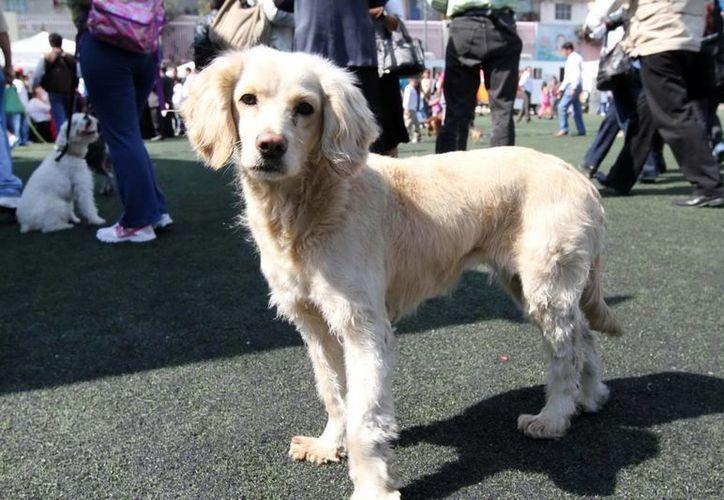 Se realiza un censo de mascotas principalmente porque se ha detectado que hay sobrepoblación canina. (Archivo/Notimex)