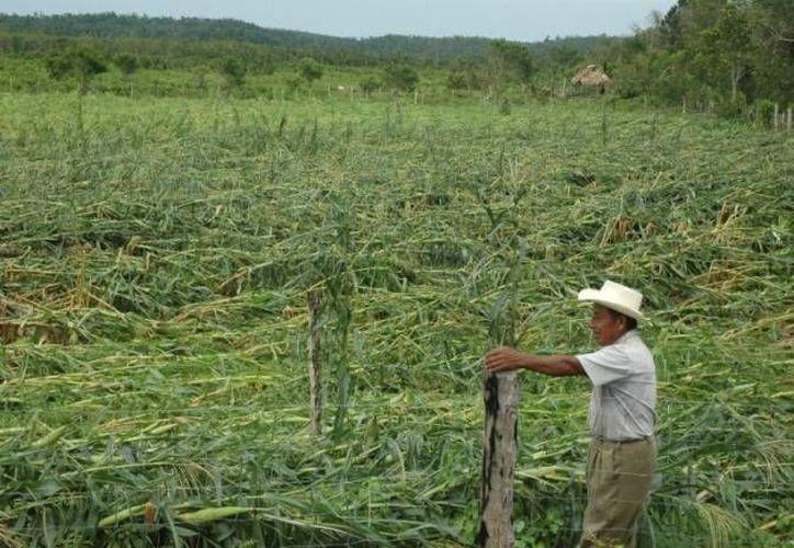 La reforma campesina pretende apoyar a los productores rurales, mediante recursos emitidos por las autoridades del sector agrícola. (Harold Alcocer/SIPSE)