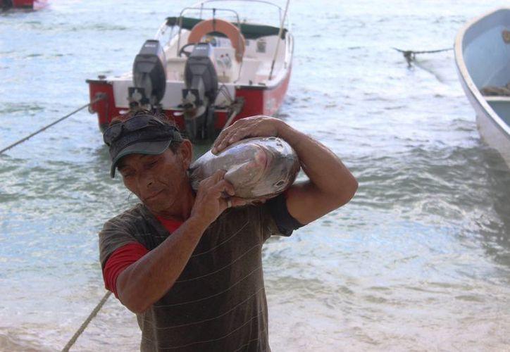 Los pescadores de Playa del Carmen temen afectaciones en sus ventas por el 'efecto Trump'. (Octavio Martínez/SIPSE)
