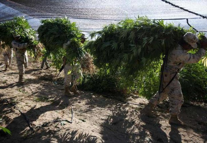 La droga asegurada estaba sembrada dentro de un parque nacional que abarca una gran extensión. (Foto de contexto)