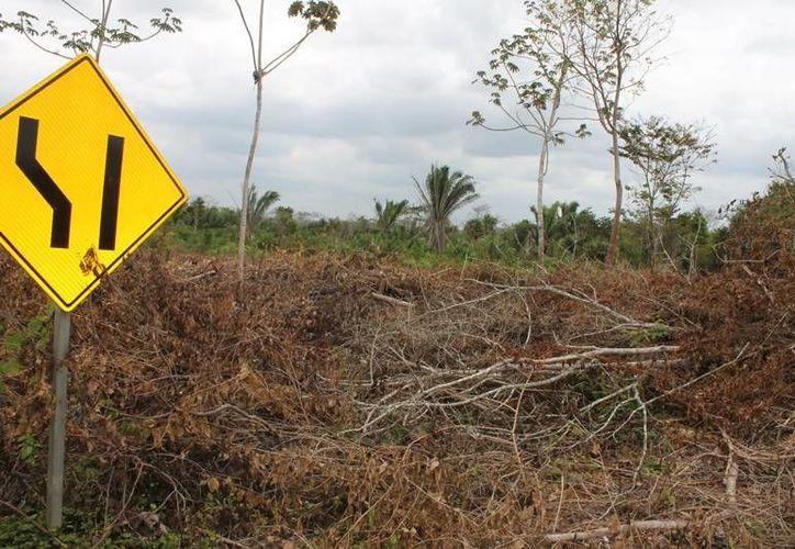 La mayoría de las quemas se presentan en lugares en donde posteriormente se solicita el cambio de uso de suelo. (Redacción/SIPSE)