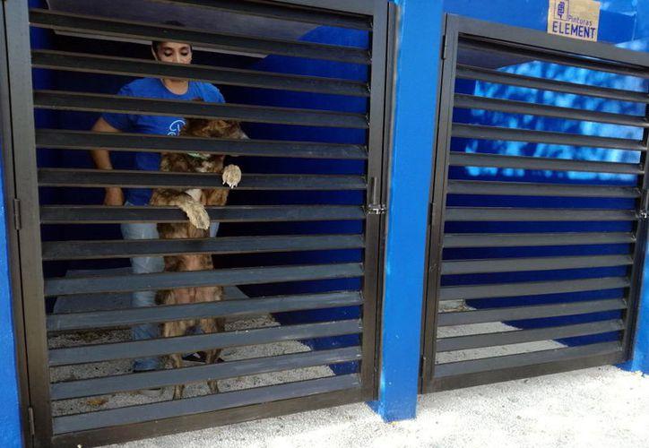 Perros y gatos son rescatados de la vía pública y reciben tratamiento. (Foto: Milenio Novedades)