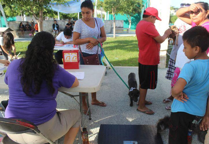 Los veterinarios son originarios de Colorado y algunos de Cancun, Puerto Morelos, y Playa del Carmen. (Sara Cauich/SIPSE)