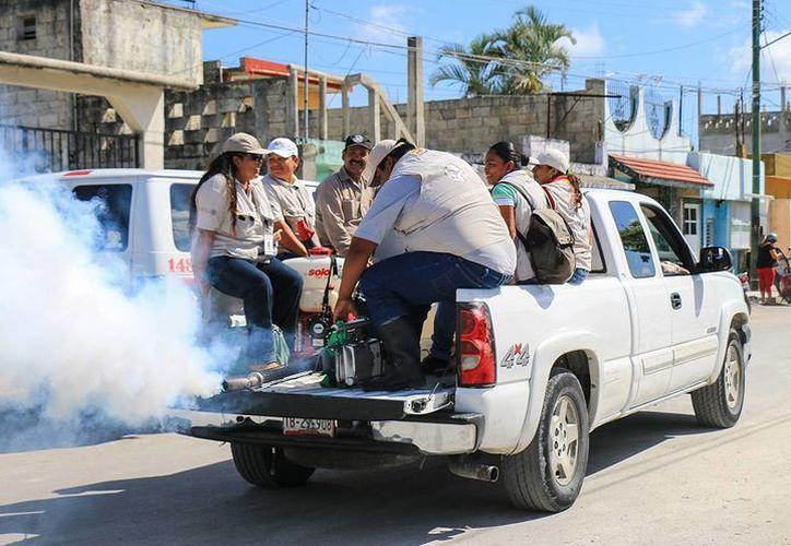 Se han confirmado sólo tres casos de dengue clásico, pero se refuerza la nebulización contra el mosco portador también del chikungunya. (Irving Canul/SIPSE)