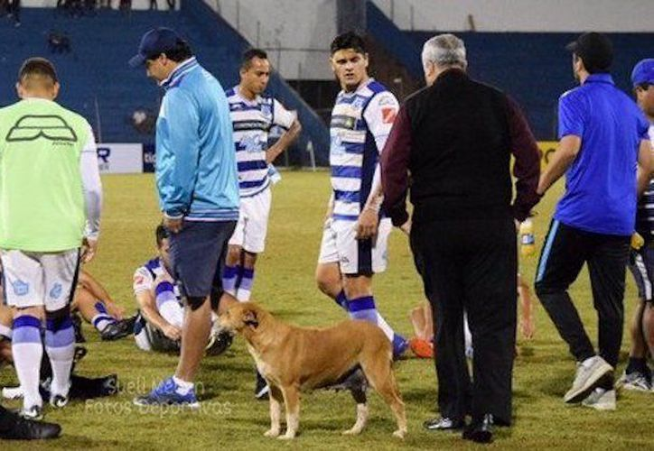 La perrita Tesapara es la principal seguidora del club 2 de Mayo, de Paraguay. (Twitter)