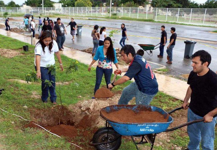 Más de 100 estudiantes acompañados de profesores y directivos universitarios, sembraron alrededor de sesenta árboles en las instalaciones de la Facultad de Química. (Milenio Novedades)