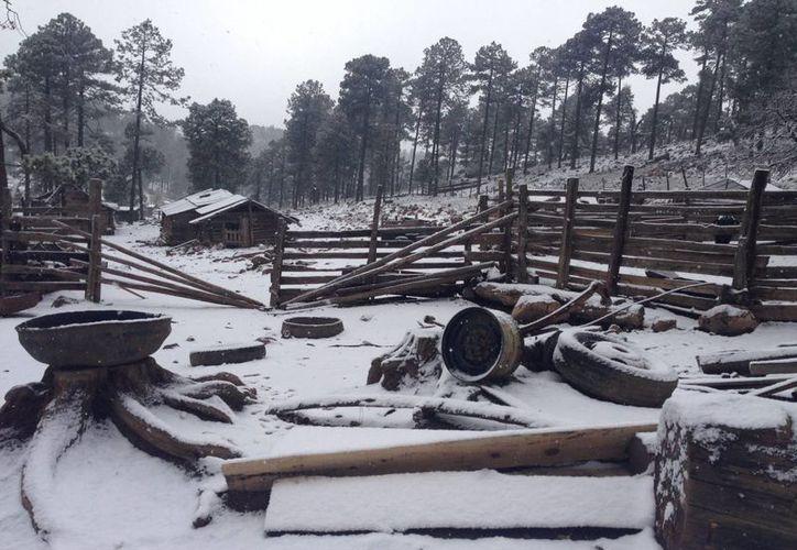 Podrían registrarse temperaturas inferiores a los 0 grados en Sonora, Chihuahua, Durango, Coahuila, Zacatecas, Nuevo León, Puebla, México, Hidalgo y Tlaxcala. La imagen es de la Rosilla, Durango. (Notimex)