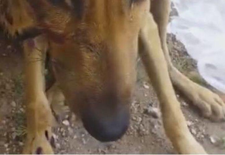 El can se encuentra recibiendo atención en la mencionada Asociación Civil. (Renacer Contigo/Facebook)