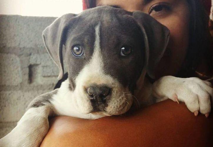 Al menos 80% de los hogares en México tienen un animal de compañía, principalmente gatos o perros. (Archivo/SIPSE.com)