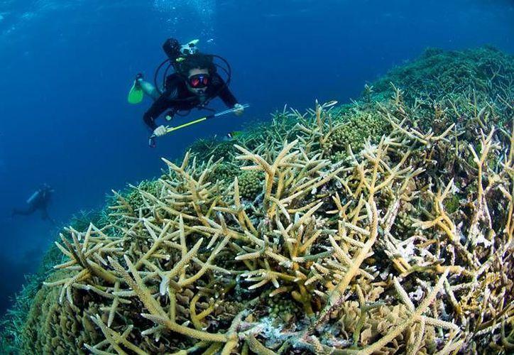 Los pescadores piden a las autoridades que se regule a quienes ofrecen tours para visitar el arrecife en Playa del Carmen. (Adrián Barreto/SIPSE)