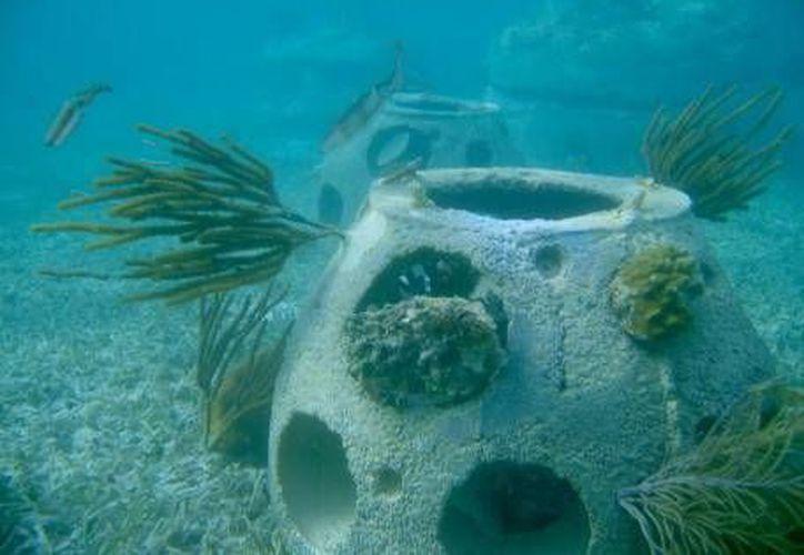 Las cenizas, no son arrojadas al aire, sino disueltas en las aguas a través de urnas que se degradan en el fondo marino. (Foto/Animal Político)
