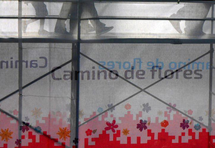 """El """"Camino de Flores"""", una muestra botánica que ocupa el ancho de una calle, en el parque de La Mejorada, en Mérida, ya recibió a 35 mil visitantes, en una semana. (Eduardo Vargas/SIPSE)"""