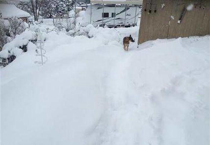 El gobernador de New Mexico decreto el estado de emergencia el domingo tras una importante nevada. En la imagen, un perro deambula por un barrio cubierto de nieve en Edgewood. (AP)