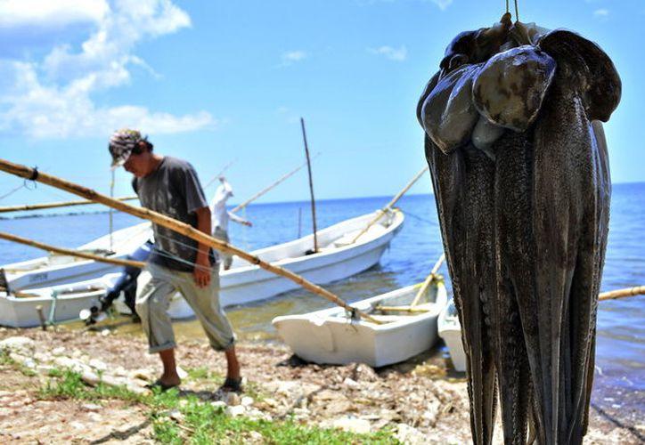 La pesca de pulpo inicia el 1 de agosto y finalizará el 15 de diciembre. (Milenio Novedades)