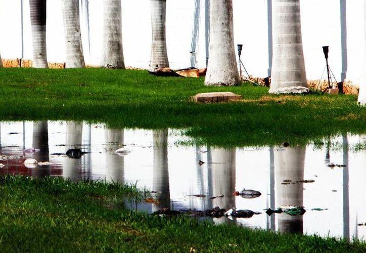 Las aguas residuales son propicias para la proliferación del mosco. (Milenio Novedades)