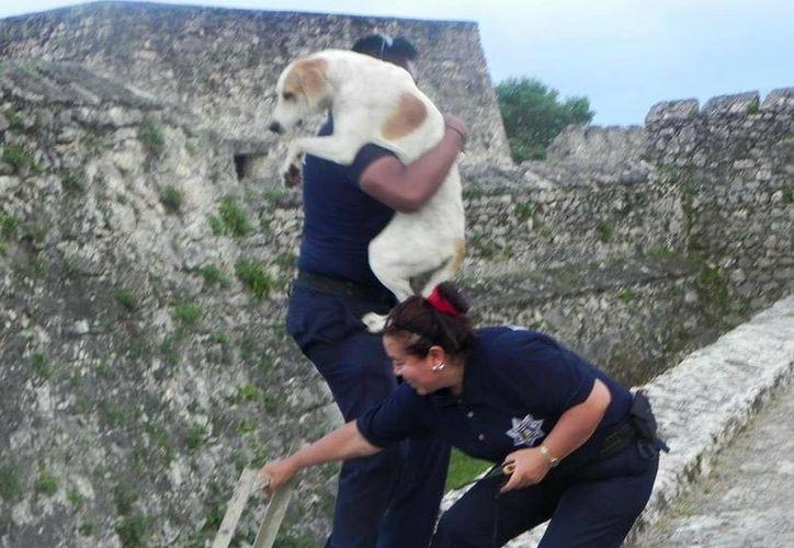 Al tomar al can, los elementos policíacos se percataron de que no sufrió lesión alguna. (Redacción/SIPSE)