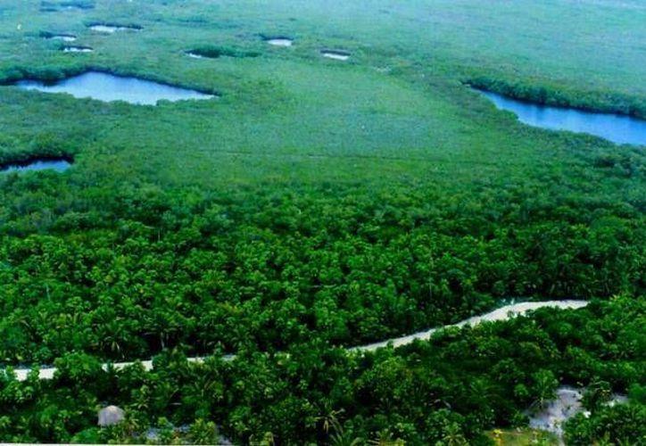 Las áreas naturales protegidas constituyen porciones terrestres o acuáticas del territorio nacional. (SIPSE)