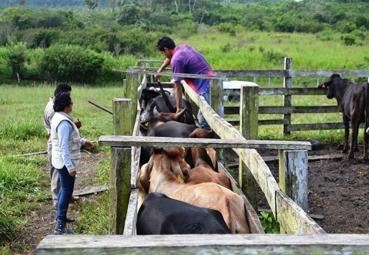 """El Departamento de Agricultura de Estados Unidos mantendrá el estatus de """"acreditado-modificado"""" para Quintana Roo. (Edgardo Rodríguez/SIPSE)"""