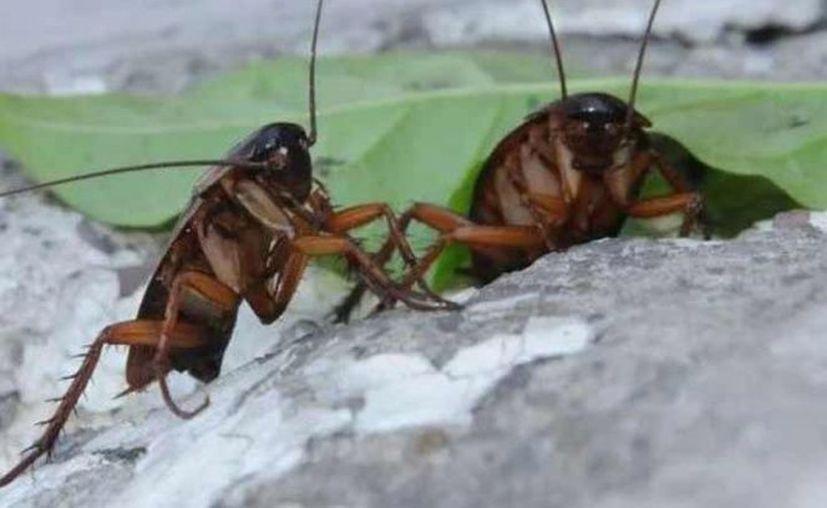 Los insectos salieron el domingo por la noche e invadieron su barrio de Bridesburg. (Excelsior)