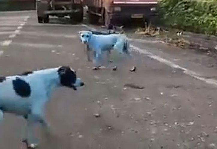 La inusual coloración de los perros está relacionada con la contaminación de un río. (Foto: YouTube)