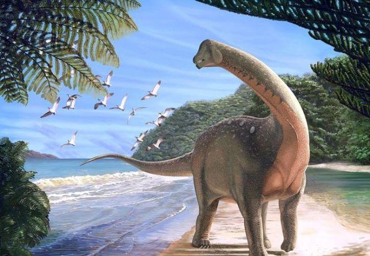 El Mansourasaurus tenía un tamaño modesto al lado de primos de titanosaurio. (Foto: Internet)