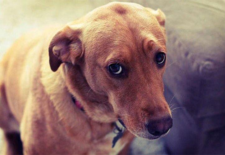 Los perros hacen 'el arco de la disculpa' en respuesta al tono y comportamiento con el que se les habla cuando son regañados. (Perfecto.guru)