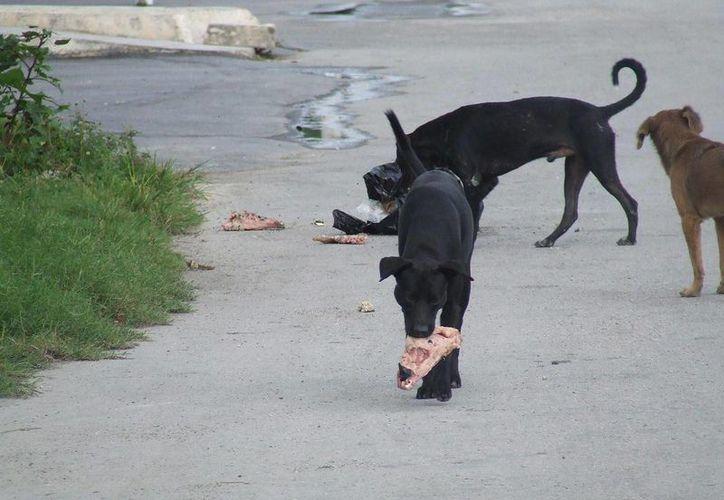 En el fraccionamiento Villas Tulum, denuncian el incremento de perros, algunos callejeros, y otros que son soltados por sus dueños. (Rossy López/SIPSE)