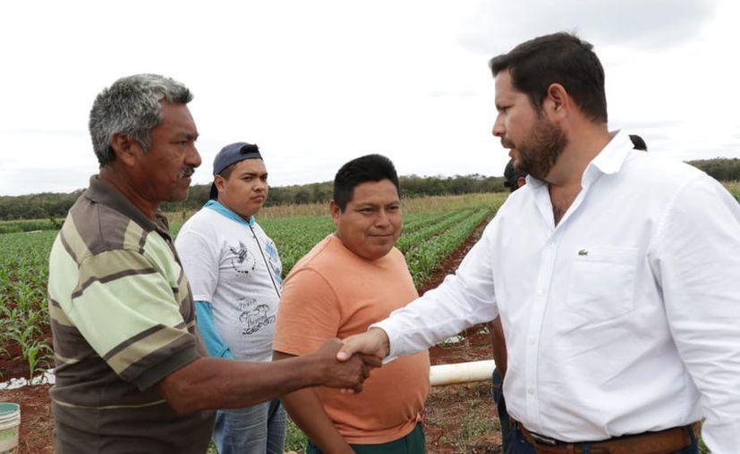 Durante 2019 se ejerció un presupuesto histórico al campo de más de 500 millones de pesos, reflejado en apoyos a familias. (Novedades Yucatán)