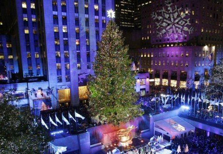 El abeto de navidad es el 'Grinch' de la genética forestal. (Agencias)