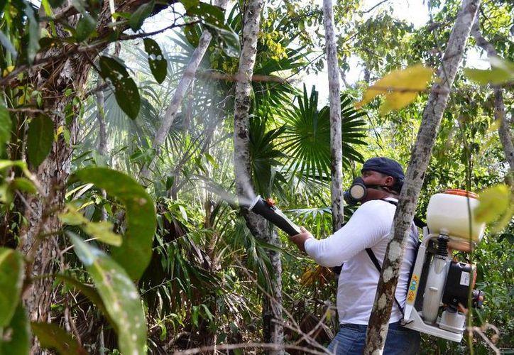 No se cuentan con los recursos para el combate de plagas. (Edgardo Rodríguez/SIPSE)
