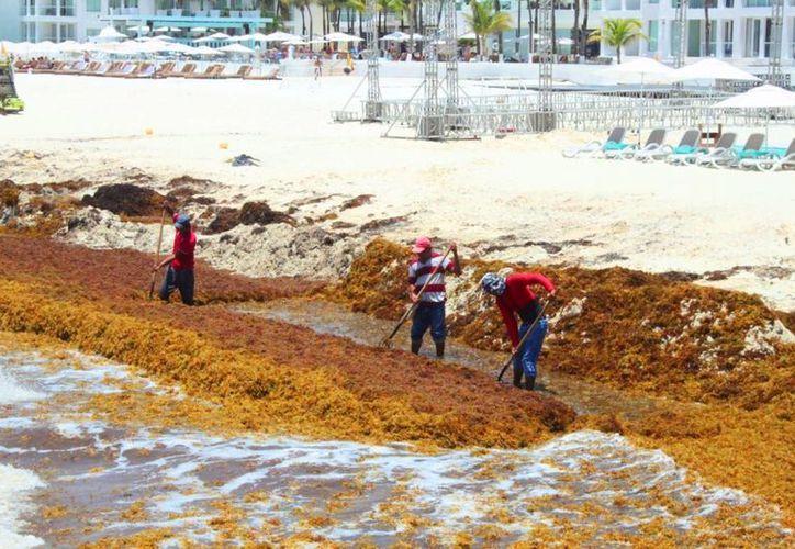 El municipio de Solidaridad espera la asignación de dos millones de pesos para la limpieza de playas. (Octavio Martínez/SIPSE)