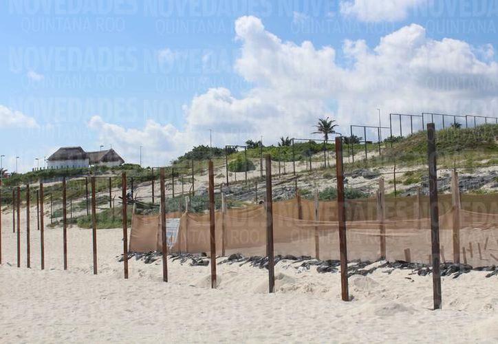 Área donde se planea construir el proyecto hotelero. (Redacción/SIPSE)