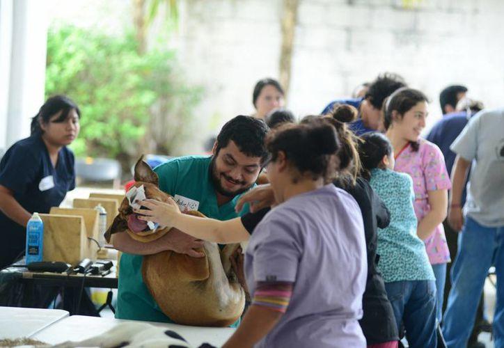 Primero en Progreso, luego en Mérida y al final en Valladolid se realizará del 4 al 11 de febrero una campaña de esterilización masiva para perros y gatos. (Foto de archivo de SIPSE)