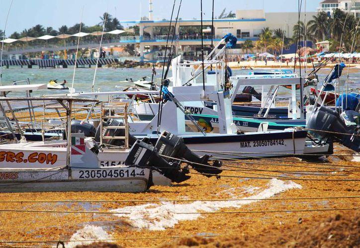 El sargazo daña el sistema de enfriamiento de las embarcaciones. (Foto: Octavio Martínez /SIPSE)