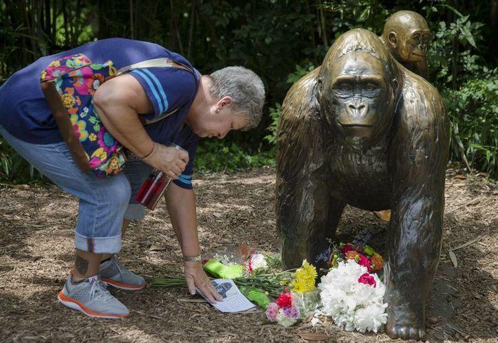 El zoológico de Cincinnati asegura que actuó correctamente al anteponer la vida del menor a la del gorila Harambe, que tenía 17 años. (AP)