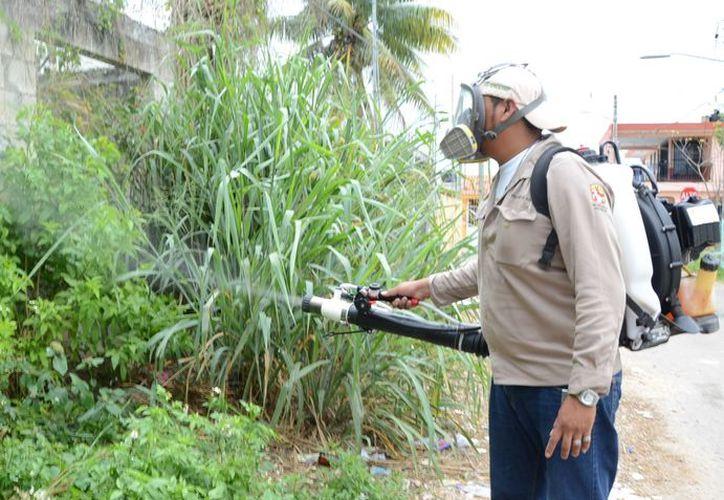 Se prevé un aumento del insecto en la temporada de lluvias, informó la Sesa.