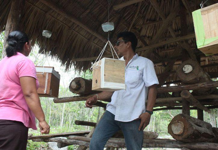 Los productores se verán beneficiados con el programa de apoyos. (Adrián Barreto/SIPSE)