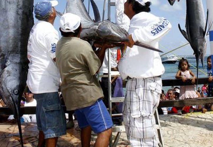 Cada año se realiza el torneo de pesca en Puerto Morelos. (Redacción/SIPSE)