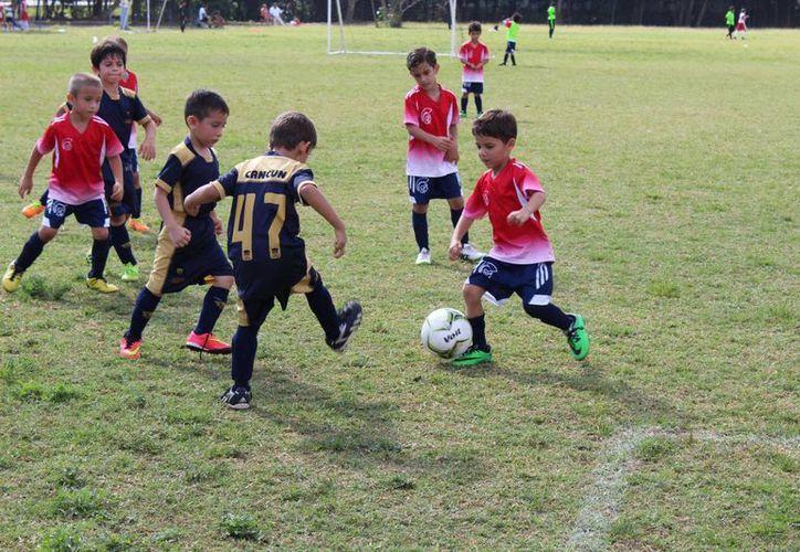 Afinan torneo de fútbol Sub 8 | Noticias de México y el Mundo