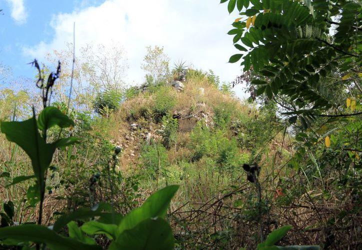 Es difícil hallar el templo maya que se prevé tiene más de mil años, ya que la zona no es de fácil acceso. (Milenio Novedades)