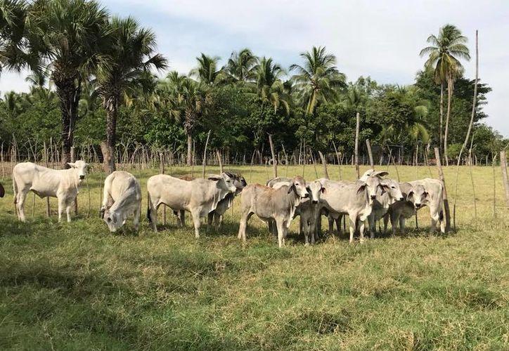 Tanto en los supermercados como a las carnicerías, el precio del kilo de carne está entre 120 y 140 pesos. (Carlos Castillo/SIPSE)