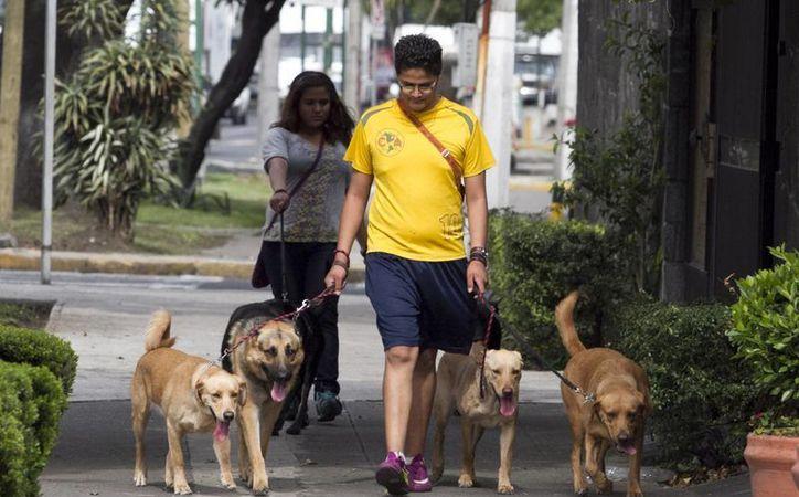 El crecimiento de dicha industria obedece a las altas ventas de alimentos para perros. (Archivo/Notimex)