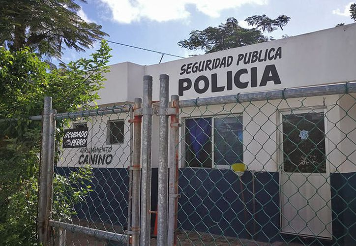 Los perros se encuentran en las instalaciones de Seguridad Pública, ubicadas sobre la avenida Puerto Juárez. (Jesús Tijerina/SIPSE)