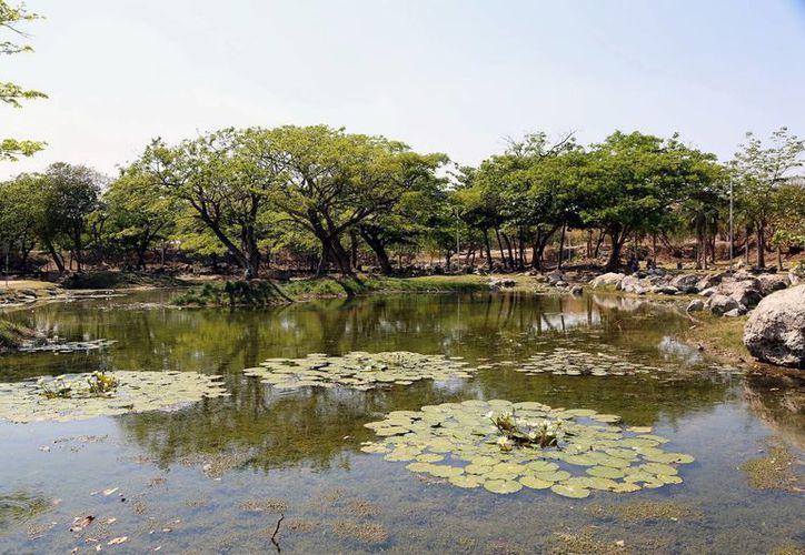 El Parque Ecológico del Poniente hace las veces de criadero de plagas, ya que está descuidado. (Albornoz/SIPSE)